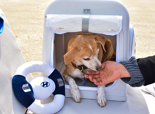 Portable pet house and dog
